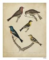 Bonapart Birds I Fine Art Print