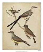Bonapart Birds II Fine Art Print