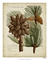 Antique Conifers I Fine Art Print