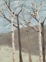 Blue Birches II Fine Art Print