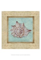Shell & Damask II Fine Art Print