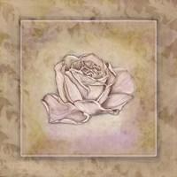 Rose Square III Framed Print