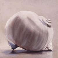Moon Snail Fine Art Print