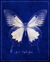 Blue Mountain Butterfly Cyanotype Fine Art Print
