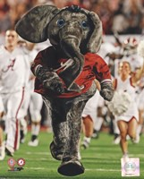 The University of Alabama Crimson Tide Mascot Fine Art Print
