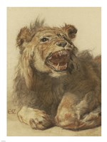 A Lion Snarling Fine Art Print