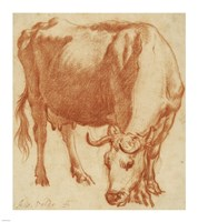 A Cow Grazing Fine Art Print