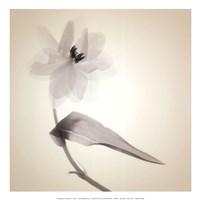 Quiet I - Mini Fine Art Print