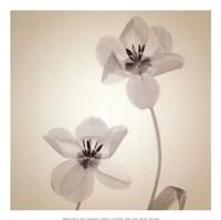 Quiet II - Mini Fine Art Print