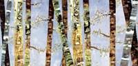 Bark Abstract Fine Art Print