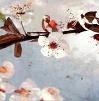 Blossom Morning I Fine Art Print