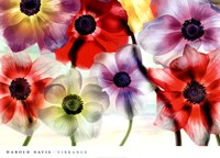 Vibrance Fine Art Print