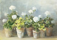White Geraniums Fine Art Print