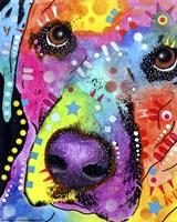 Closeup Labrador Framed Print