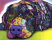 Savvy Labrador Fine Art Print