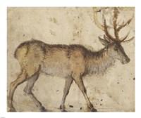 Study of a Stag Fine Art Print