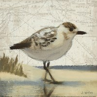 Beach Bird I Fine Art Print