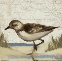 Beach Bird IV Fine Art Print