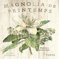 Magnolia de Printemps Fine Art Print