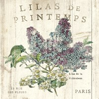 Lilas de Printemps Fine Art Print