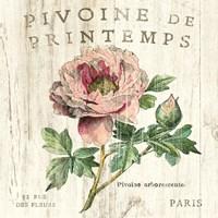 Pivoine de Printemps Fine Art Print