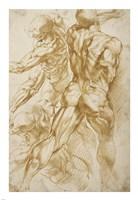 Anatomical Studies Fine Art Print