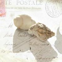 Postal Shells I Framed Print