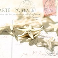 Postal Shells II Fine Art Print