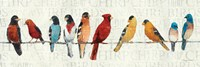 The Usual Suspects - Birds on a Wire Framed Print