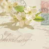 Vintage Letter and Apple Blossoms Fine Art Print