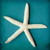Sea Star II Fine Art Print