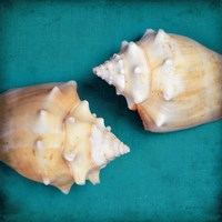 Two Shells I Fine Art Print