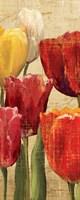 Tulip Fantasy on Cream III Framed Print