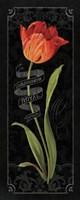 Tulipa Botanica II Framed Print