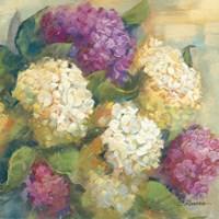 Hydrangea Delight II Fine Art Print