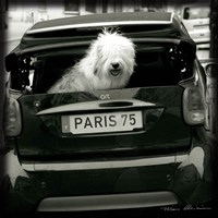 Paris Dog I Fine Art Print