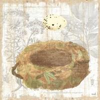 Botanical Nest I Framed Print