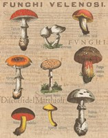 Funghi Velenosi I Framed Print