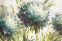 Hydrangea Field Framed Print