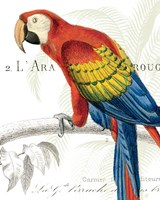 Parrot Botanique II Framed Print