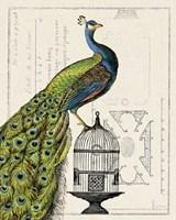 Peacock Birdcage I Fine Art Print
