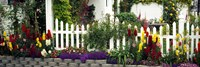 Flowers and picket fence in a garden, La Jolla, San Diego, California, USA Fine Art Print