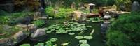 Japanese Garden at University of California Fine Art Print