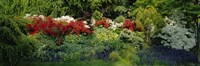 High Angle View Of Flowers In A Garden, Baltimore, Maryland, USA Fine Art Print