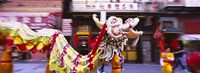 Group of people performing dragon dancing on a road, Chinatown, San Francisco, California, USA Fine Art Print