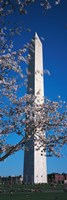 Cherry Blossom in front of an obelisk, Washington Monument, Washington DC, USA Fine Art Print