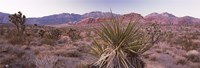 Yucca plant in a desert, Red Rock Canyon, Las Vegas, Nevada, USA Fine Art Print
