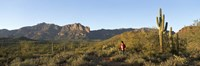 Hiker standing on a hill, Phoenix, Arizona, USA Fine Art Print