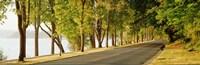 Trees on both sides of a road, Lake Washington Boulevard, Seattle, Washington State, USA Fine Art Print