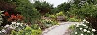 Bench in a garden, Olbrich Botanical Gardens, Madison, Wisconsin, USA Fine Art Print